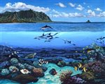 Lynne Domokos-Boyer Sealife at Kanehoalani (Art Print)