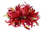 Mauve Large Spider Lily Hair Clip 6""