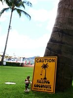 Falling Coconuts Tin Sign