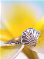 Vanessa Pack Silver & K14 Gold Filled Gold Shell Ring