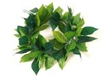 Green Maile head lei (XL)