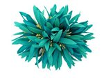 #21 Turquoise Spider Lily Hair Clip 6""