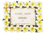 White&Yellow Plumeria Photo Frame