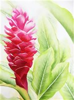 Sabado Art Studio Hawaii Torch Ginger  Wall Art